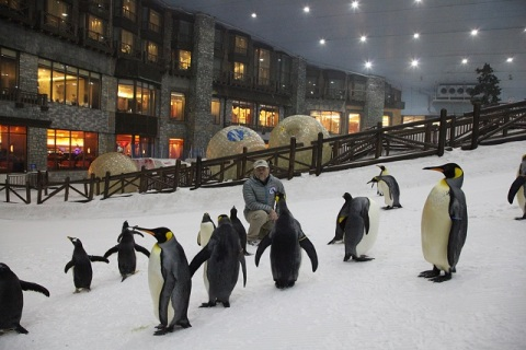 ski-dubai-penguins