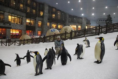 ski-dubai-penguins