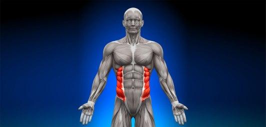 Oblique-muscles
