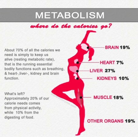 metabolism-and-calories