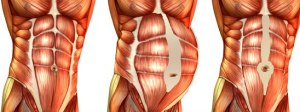 ABDOMINAL MUSCLES AFTER PREGNANCY